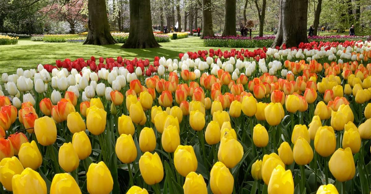 Keukenhof tulipanes Holanda - Países Bajos