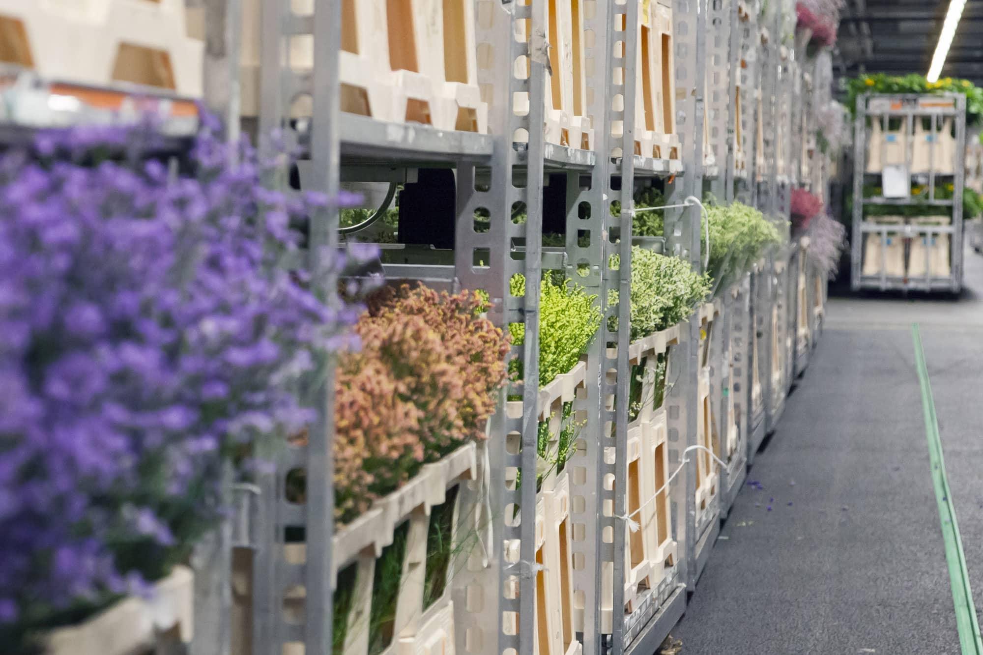 Subasta de flores Aalsmeer Holanda - Países Bajos