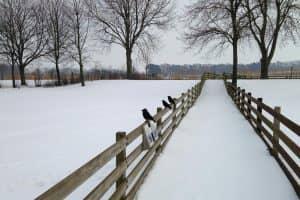 invierno en holanda