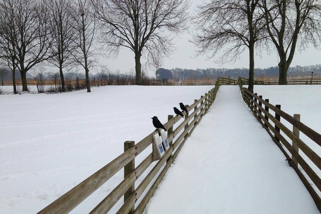 Invierno Holanda - Países Bajos