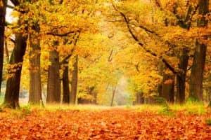 otoño en holanda