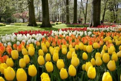 Primavera Holanda - Países Bajos
