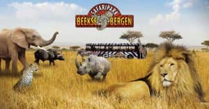 safari-beekse-bergen-holanda